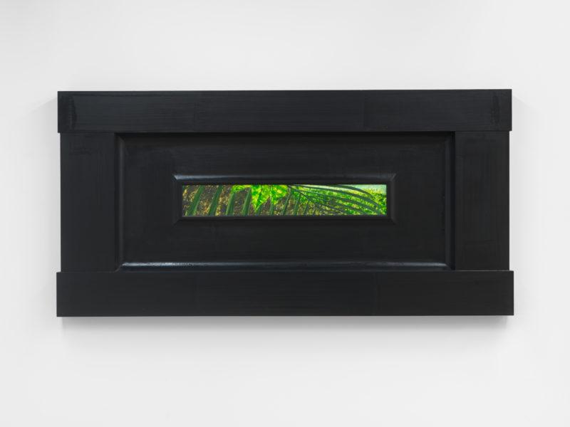 Neil Jenney, North American Vegetae, 2007