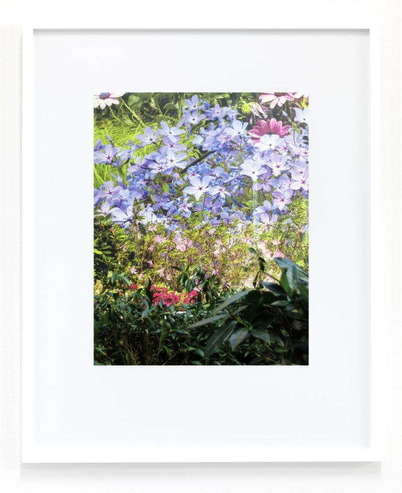 Peter Scott, Untitled (Flowers), 2018
